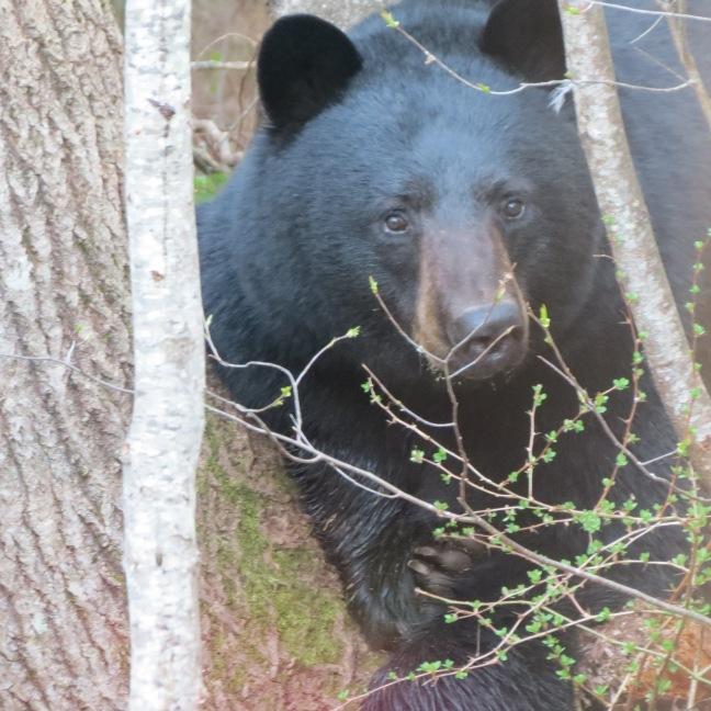 bears plus 4820