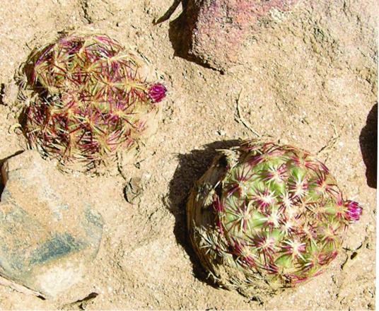 Sara-cactus.jpg