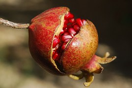 pomegranate-185456__180.jpg