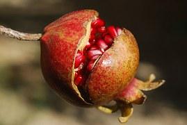 pomegranate-185456__180.jpg