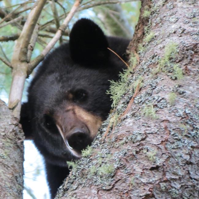 TB IN TREE STICKS