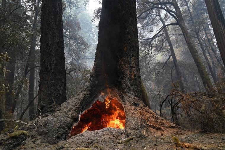 200824-big-basin-redwood-fire-ac-956p_c1d4208021b6298472864d5be24b0736.fit-760w.jpg